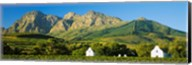 Vineyard in front of mountains, Babylons Torren Wine Estates, Paarl, Western Cape, Cape Town, South Africa Fine-Art Print