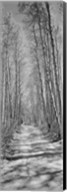 Trees along a road, Log Cabin Gold Mine, Eastern Sierra, Californian Sierra Nevada, California (black and white) Fine-Art Print