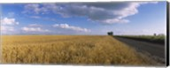 Wheat crop in a field, North Dakota, USA Fine-Art Print