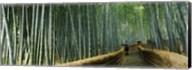 Stepped walkway passing through a bamboo forest, Arashiyama, Kyoto Prefecture, Kinki Region, Honshu, Japan Fine-Art Print