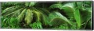 Palm fronds and green vegetation, Seychelles Fine-Art Print