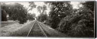 Railroad track, Napa Valley, California, USA Fine-Art Print