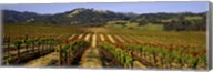 Vineyard, Geyserville, California Fine-Art Print