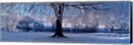 Winter Trees Perkshire Scotland Fine-Art Print