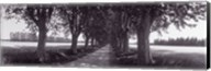 Road Through Trees, Provence, France Fine-Art Print