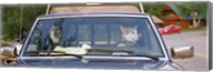 Close-up of two dogs in a pick-up truck, Main Street, Talkeetna, Alaska, USA Fine-Art Print