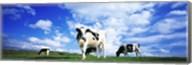 Cows In Field, Lake District, England, United Kingdom Fine-Art Print