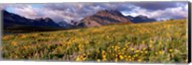 Flowers in a field, Glacier National Park, Montana, USA Fine-Art Print