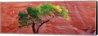 Low Angle View Of A Cottonwood Tree In Front Of A Sandstone Wall, Escalante National Monument, Utah, USA Fine-Art Print