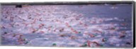 Triathlon athletes swimming in water in a race, Ironman, Kailua Kona, Hawaii, USA Fine-Art Print