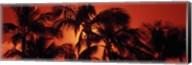 Palm trees at dusk, Kalapaki Beach, Hawaii Fine-Art Print