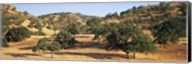 Oak trees on hill, Stanislaus County, California, USA Fine-Art Print