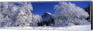 Half Dome, Yosemite National Park, Mariposa County, California Fine-Art Print