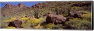 Cacti with wildflowers on a landscape, Organ Pipe Cactus National Monument, Arizona, USA Fine-Art Print