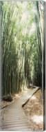 Trail in a bamboo forest, Hana Coast, Maui, Hawaii, USA Fine-Art Print