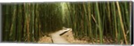 Wooden path surrounded by bamboo, Oheo Gulch, Seven Sacred Pools, Hana, Maui, Hawaii, USA Fine-Art Print