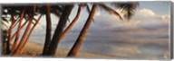 Palm trees on the beach at sunset, Rarotonga, Cook Islands Fine-Art Print