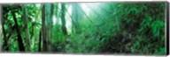 Light through a Bamboo forest, Chiang Mai, Thailand Fine-Art Print