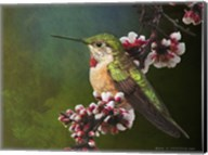 Hummer with Blossoms Fine-Art Print