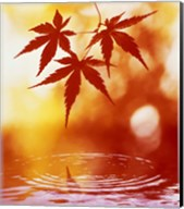 Selective focus of red leaves above water ripples Fine-Art Print