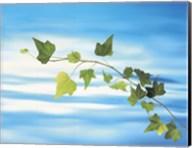 Green vine floating in blue water Fine-Art Print