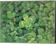 Close up of green clover Fine-Art Print