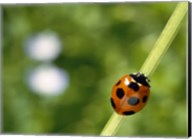 Ladybug on a stem Fine-Art Print