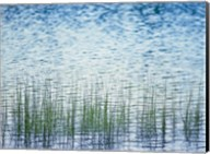 Grass in water Fine-Art Print