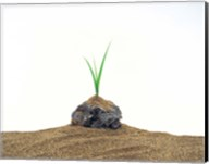 Grass Growing From Stone Settled In Sand Fine-Art Print