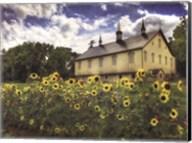 Sunflower Garden Fine-Art Print