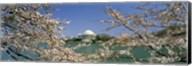 Cherry blossom with memorial in the background, Jefferson Memorial, Tidal Basin, Washington DC, USA Fine-Art Print