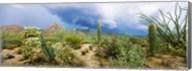 Saguaro National Park, Tucson, Arizona Fine-Art Print