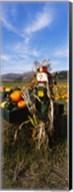 Scarecrow in Pumpkin Patch, Half Moon Bay, California (vertical) Fine-Art Print