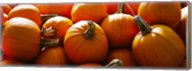Pumpkins, Half Moon Bay, California, USA Fine-Art Print