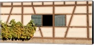Detail of half timber house and grape vines, Strumpfelbach, Baden-Wurttemberg, Germany Fine-Art Print