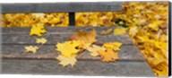 Fallen leaves on a wooden bench, Baden-Wurttemberg, Germany Fine-Art Print