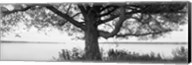 Tree on a Lake, Wisconsin (black & white) Fine-Art Print