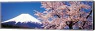 Mt Fuji Cherry Blossoms Yamanashi Japan Fine-Art Print