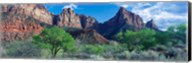 Cottonwood trees and The Watchman, Zion National Park, Utah, USA Fine-Art Print