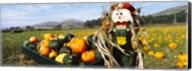Scarecrow in Pumpkin Patch, Half Moon Bay, California (horizontal) Fine-Art Print