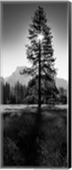Sun Behind Pine Tree, Half Dome, Yosemite Valley, California, USA Fine-Art Print