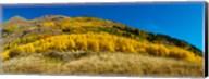 Aspen trees on mountain, Alpine Loop Scenic Backway, San Juan National Forest, Colorado, USA Fine-Art Print