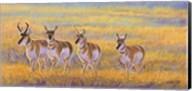 Pronghorn Fine-Art Print