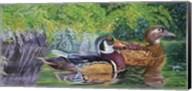 Bayou Wood Ducks Fine-Art Print