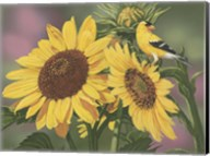 Goldfinch And Sunflowers Fine-Art Print
