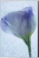 Flowers on Ice-14 Fine-Art Print