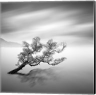 Water Tree VI Fine-Art Print