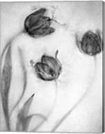 Tulipanes Rojos-2 Fine-Art Print