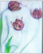 Tulipanes Rojos Fine-Art Print