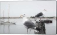 Two Seagulls & Boats Fine-Art Print